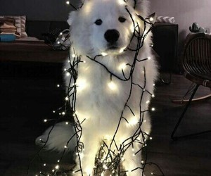 dog, light, and animal image