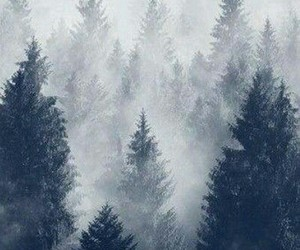 forest, tree, and fog image