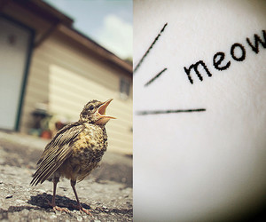 bird, catcall, and confusion image