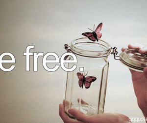 amazing, butterflies, and free image