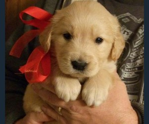 adorable, christmas, and puppy image