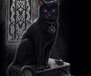 cat, black, and magic image