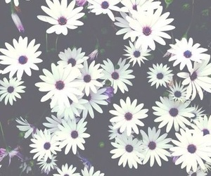 flowers, white, and wallpaper image
