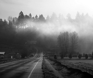 road, fog, and nature image
