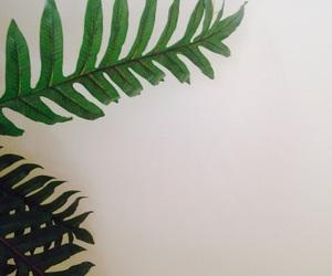 aesthetic, beautiful, and plants image