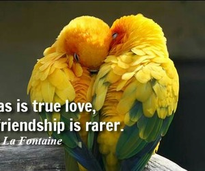 friendship, life, and true image