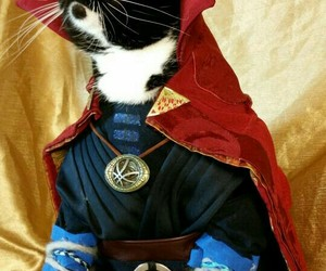 cat and Marvel image