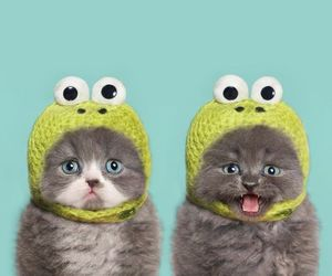 cat, cute, and frog image