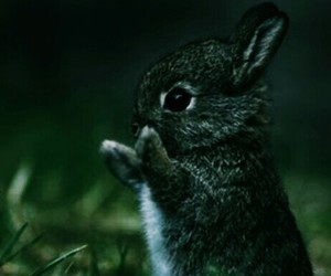 Animales, bebes, and rabbit image