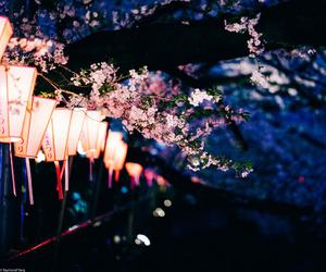 anime, cherry blossom, and flower image