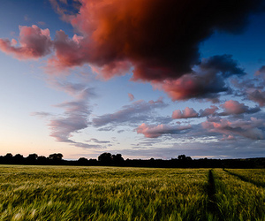 barley, clouds, and field image