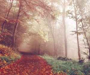 autumn, forest, and trees image