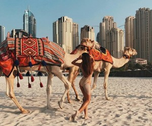 beach, camel, and life style image