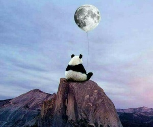 panda, moon, and sky image