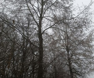 grey, winter, and mypic image