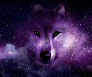 wolf and space image