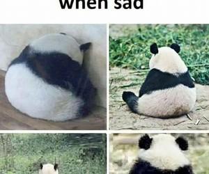 panda, animal, and alone image