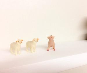 animal, sheep, and pig image