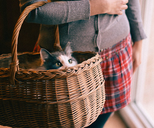 cat, basket, and photography image