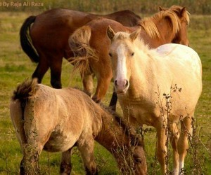 animals, caballo, and cheval image