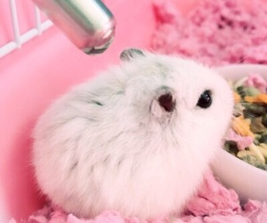 hamster and розовый image
