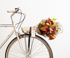 flowers, bike, and white image