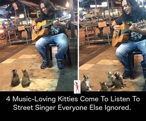cats, kittens, and music image