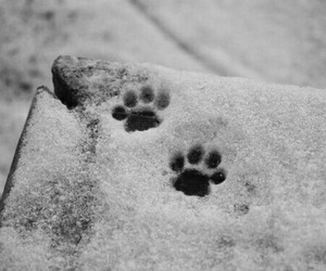 snow, winter, and cat image