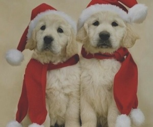 christmas, puppies, and snow image