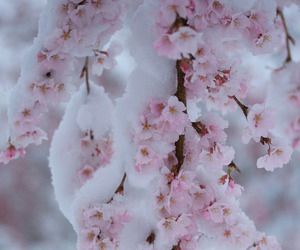 snow, flowers, and winter image