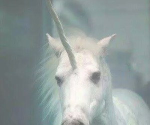 real, unicorn, and wallpaper image