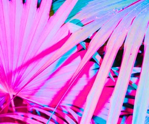 bright, magenta, and tropical image