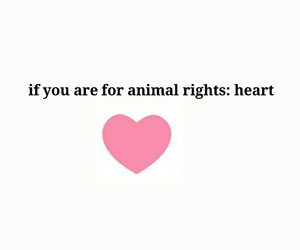 animal rights, enviorment, and love image