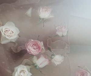 rose, pink, and flowers image