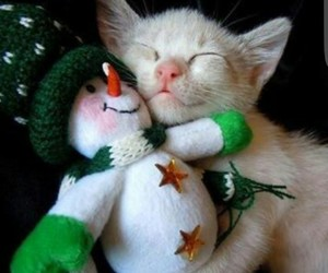 cat, crhistmas, and sweet image