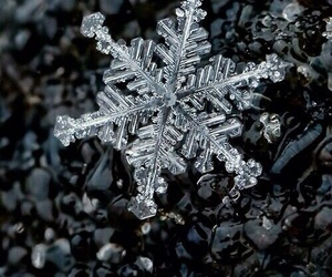 snowflake, winter, and background image