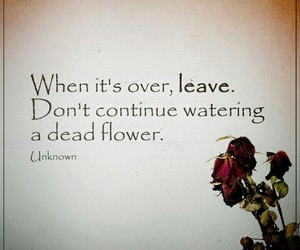 dead flower, leave, and watering image