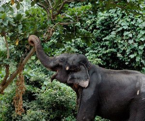 elephant, tropical, and animal image