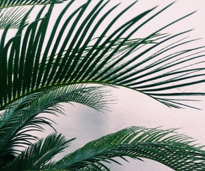 aesthetic, tropical, and green image
