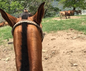 adventure, fun, and horse image