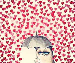 love, cat, and hearts image