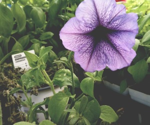 flower, greenhouse, and nature image