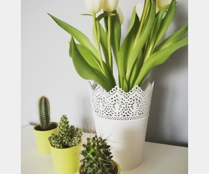 beauty, cacti, and flowers image