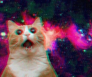 cat, galaxy, and funny image