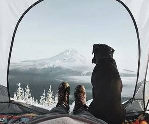 dog, wild, and winter image