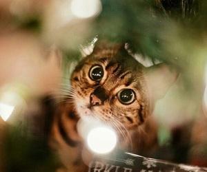 cat, christmas, and christmas tree image