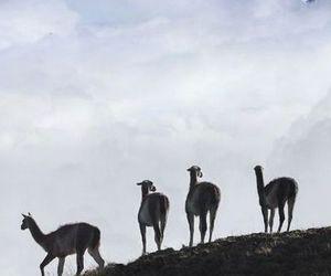 patagonia, el chalten, and argentina: image