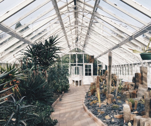 plants, nature, and tumblr image