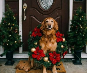 dog, christmas, and winter image