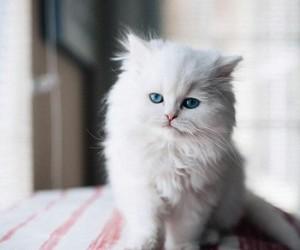 animal, cat, and tumblr image